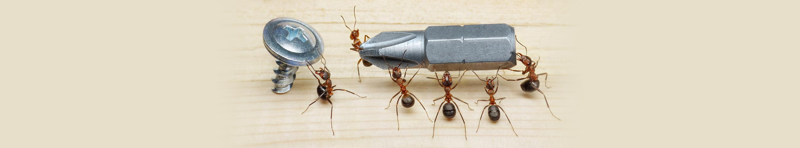 carpenter-ant-control-vancouver-slide