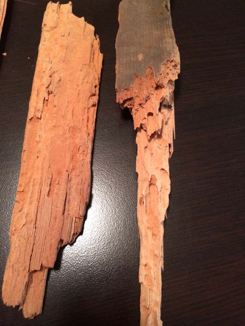 wood-boring-insect-inspection-in-vancouver-bc1